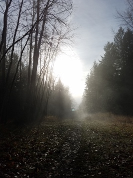 Foggy again